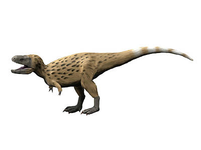 Tarbosaurus Photograph - Tarbosaurus Is A Theropod Dinosaur by Nobumichi Tamura