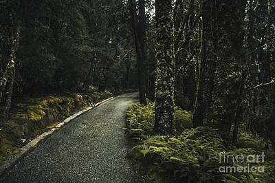 Tasmanian Road Landscape In Dense Country Forest Art Print by Jorgo Photography - Wall Art Gallery