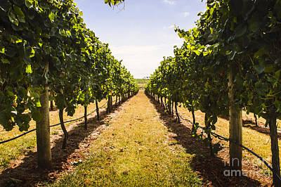 Grapevine Photograph - Tasmanian Vineyard Landscape. Australia Wines by Jorgo Photography - Wall Art Gallery