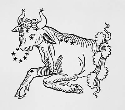 Signs Of The Zodiac Drawing - Taurus  by Italian School