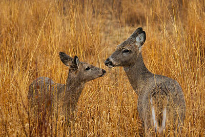 Metro Park Photograph - Tender Moment  by James Marvin Phelps