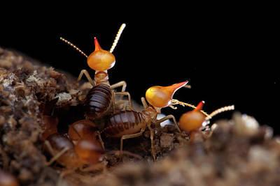 Termites Art Print