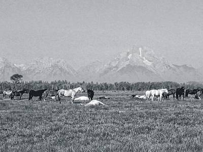 Photograph - Teton Herd by Joe Duket