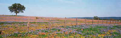 Barbed Wire Fences Photograph - Texas Bluebonnets And Indian by Panoramic Images