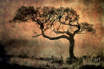 Textured Tree In The Mist Art Print by Ray Pritchard