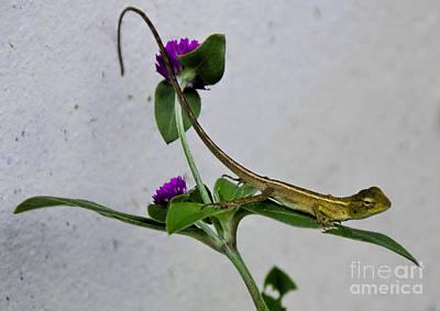 Superhero Ice Pops - Thai Garden Lizard by Ted Guhl