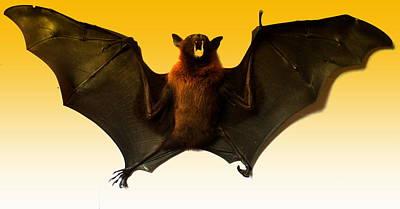 Photograph - The Bat by Salman Ravish