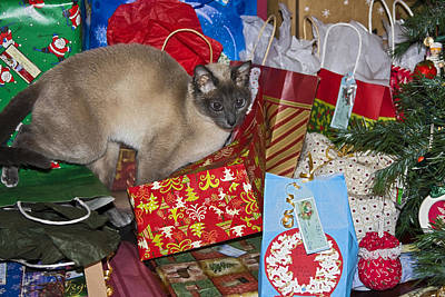 Tonkinese Cat Photograph - The Best Gift by Sally Weigand