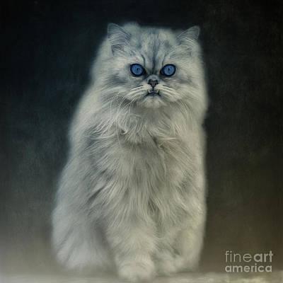 Pet Portraits Digital Art - The Cat by Angela Doelling AD DESIGN Photo and PhotoArt