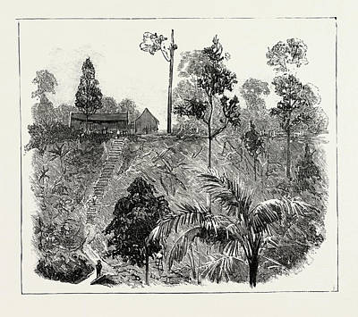 The Cultivation Of Tobacco In Sumatra, Indonesia Art Print by Indonesian School