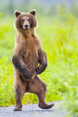 Photograph - The Dancing Bear by Tim Grams