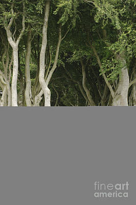 Armoy Photograph - The Dark Hedges, Northern Ireland by John Shaw