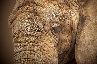 Photograph - The Elephant by Ernie Echols