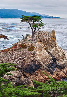 Lone Cypress Photograph - The Famous Lone Cypress Tree At Pebble Beach In Monterey California by Jamie Pham