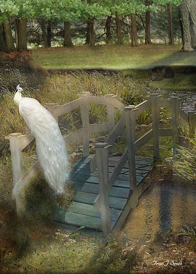 White Peacock Photograph - The Foot Bridge by Fran J Scott