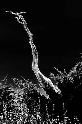 Dead Tree Trunk Digital Art - The Ghost Tree by Ron Regalado