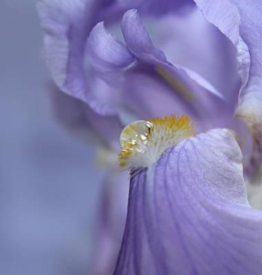 Irises Photograph - The Gift by Krissy Katsimbras