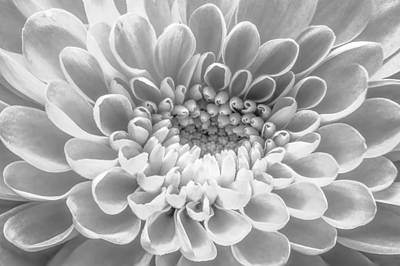 Photograph - The Heart Of A Mum by Ron Pate