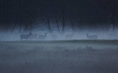 Photograph - The Herd by Angi Parks