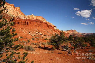 Photograph - The High Desert Capitol Reef National Park by Butch Lombardi