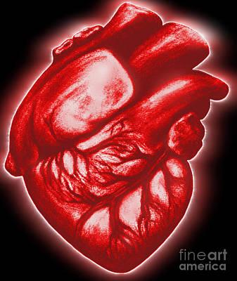 Heart Beat Photograph - The Human Heart by Dennis Potokar