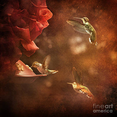 Daydreams Art Photograph - The Hummingbird Feeder by Cindy Singleton