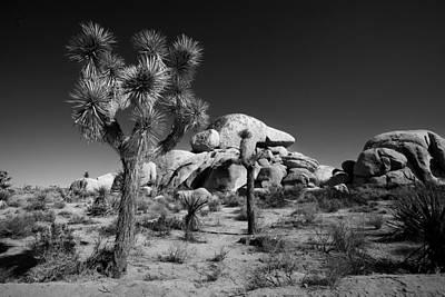 Joshua Tree Np Photograph - The Joshua Tree by Peter Tellone