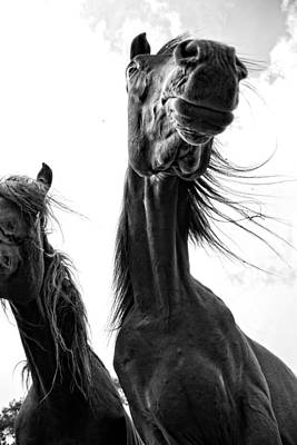 Black Horse Photograph - The King by Emily Stauring
