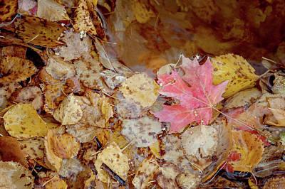 The Last Leaf Art Print by Ramona Murdock