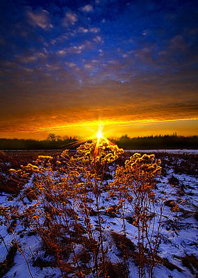 The Little Things Print by Phil Koch