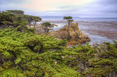 Photograph - The Lone Cypress by Stephen Campbell