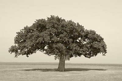 Photograph - The Lonely Tree by Charles Beeler