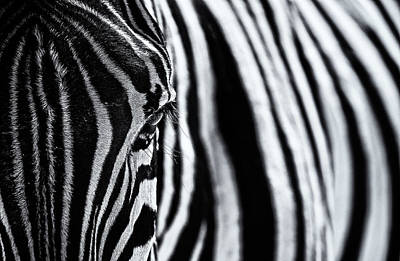 Animal Abstract Photograph - The Look Of Nature by Marco Tagliarino