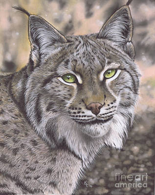 Pastel - The Lynx Effect by Karie-Ann Cooper