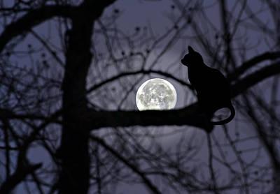 The Moon Watcher Art Print by Susan Leggett