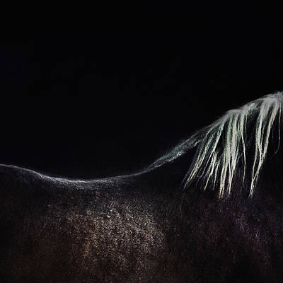 Abstract Lights Photograph - The Naked Horse by Piet Flour