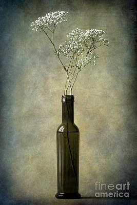 Photograph - The Olive Oil Bottle by Barbara Corvino