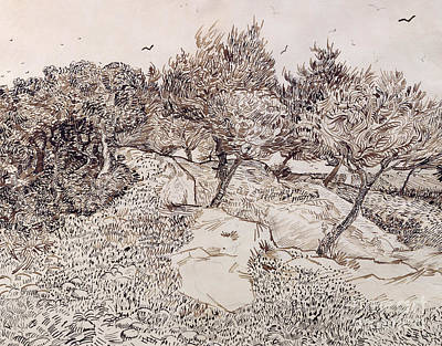 Crow Drawing - The Olive Trees by Vincent Van Gogh