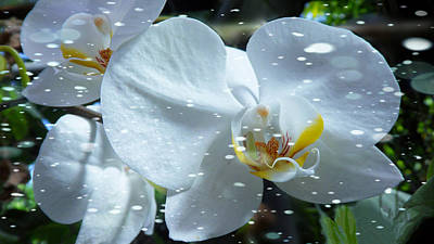 Photograph - The Orchids With Snow by Xueyin Chen