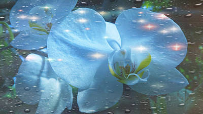 Photograph - The Orchids With Water Drops by Xueyin Chen