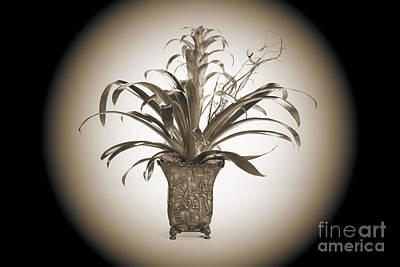 Photograph - The Plant Arrangement 8034.01 by M K Miller