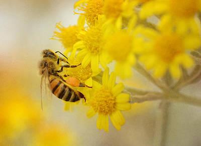 Photograph - The Pollinator 2 by Fraida Gutovich