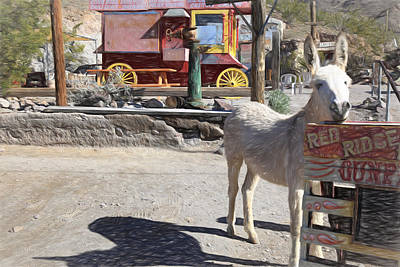 Burros Photograph - The Poser by Donna Kennedy