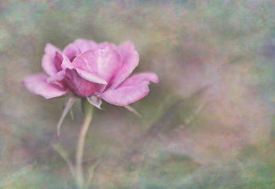 Photograph - The Rose by David and Carol Kelly
