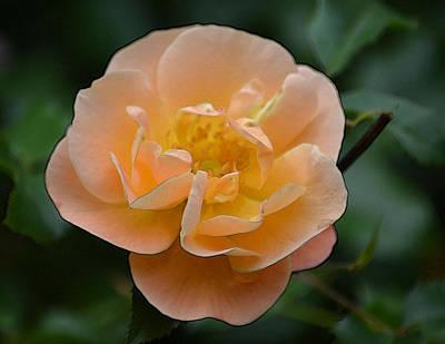 The Rose Art Print by Joe Bledsoe