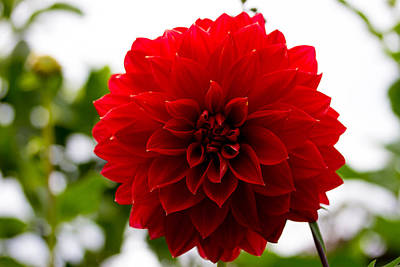 Massachussetts Photograph - The Scarlet Flower by Kathleen Odenthal