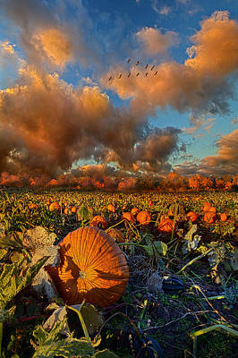 Pumpkin Patch Photograph - The Survivors by Phil Koch