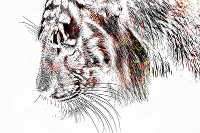 White Tiger Mixed Media - The Tiger by Tommytechno Sweden