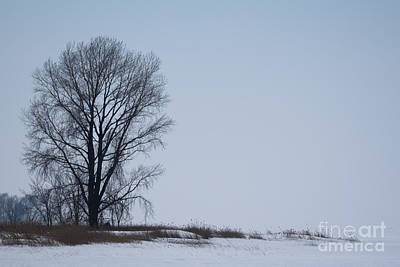 Photograph - The Tree by Ronald Grogan