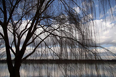 Photograph - The Veil Of A Tree by Cora Wandel
